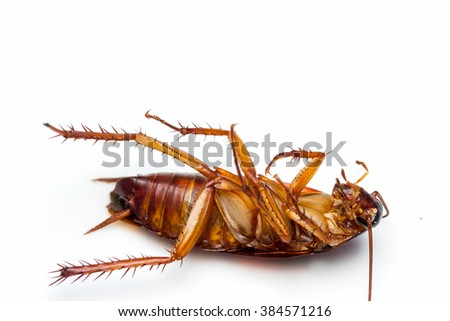 Dead cockroach turn face up on floor, isolate on white background. - stock photo