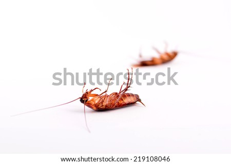 Dead cockroaches isolated on a white