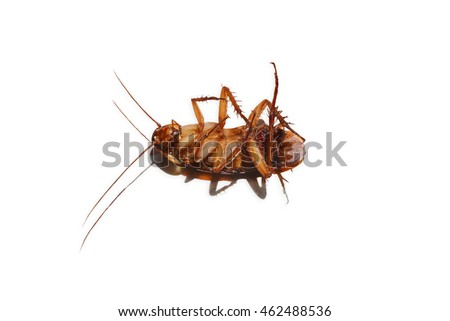 Dead cockroaches isolated on white background