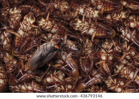 Dead cockroaches nest ,Cockroaches die as a dense nest and last one cockroach walking. - stock photo