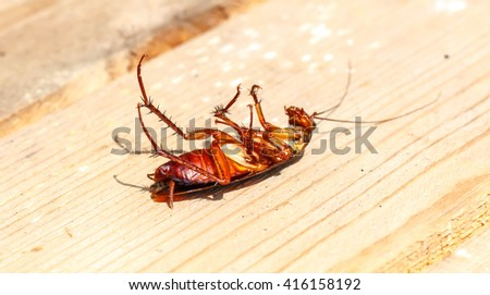 Dead cockroaches on floor - stock photo