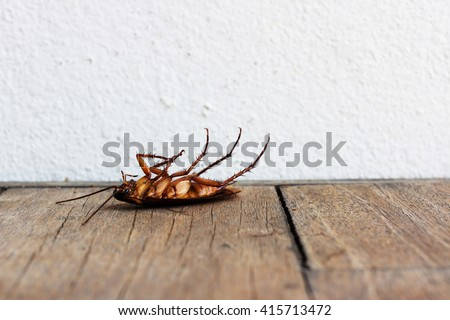 Dead cockroaches on wooden table - stock photo