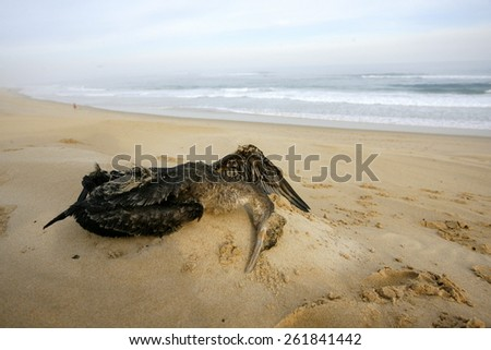Dead cormorant bird on the sea sand with the sea in the background - stock photo