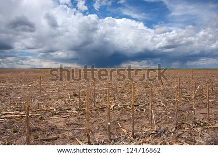 Dead corn field due to drought, with incoming rainstorm, and hopes of the end of the dry season. - stock photo