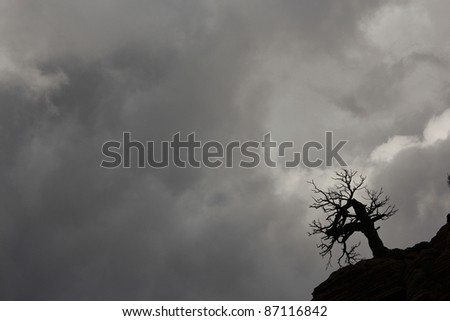 Dead creepy tree on hill against dark stormy sky. - stock photo