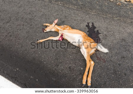 Dead dog on road