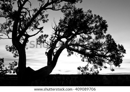 Dead dried tree black silhouette in sunset, black and white image