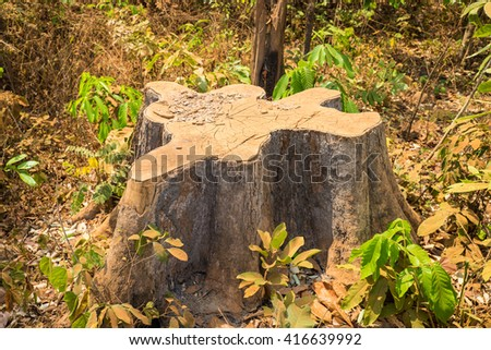 Dead dry sawed stump in Tay Nguyen, Central Highlands of Vietnam - stock photo