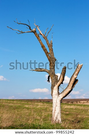 Dead dry tree near Varna,Bulgaria - stock photo