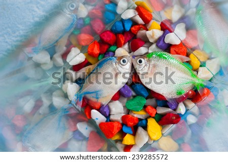 Dead fish in a glass - stock photo