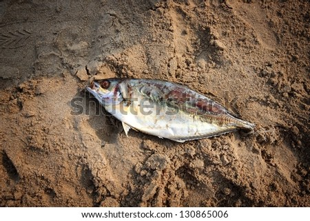 dead fish on the beach - stock photo