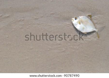 Dead fish on the beach - stock photo