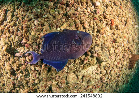 Dead fish underwater killed by pollution and environmental damage - stock photo