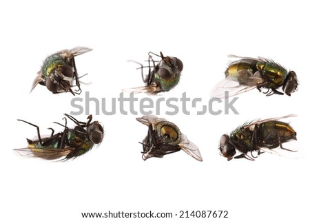 dead flies isolated on white background - stock photo
