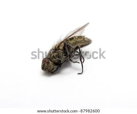 dead fly - stock photo