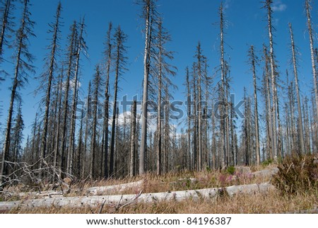 Dead forest in Ploeckenstein, Germany - stock photo