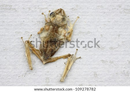 Dead frog on the wall - stock photo
