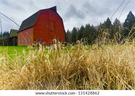 Dead grass with red barn in the background - stock photo