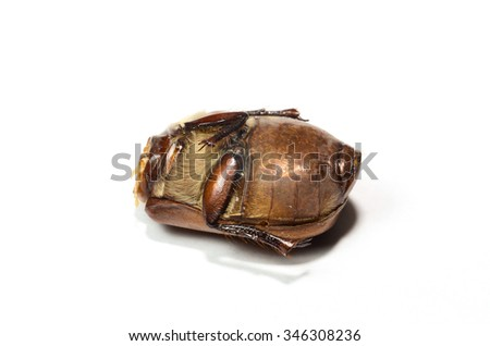 dead insect isolated on white background - stock photo