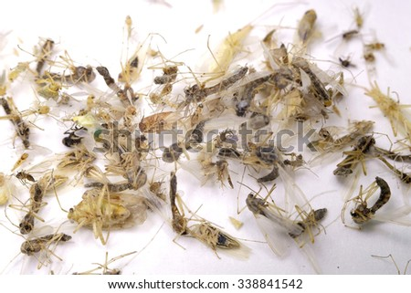 dead insects: insect repellent, lice, cockroaches, beetles, ants - stock photo