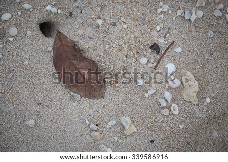 dead leaf on sand - stock photo