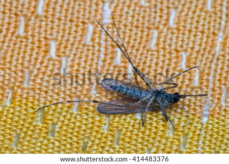 dead mosquito on orange fabric background laying on its back - stock photo