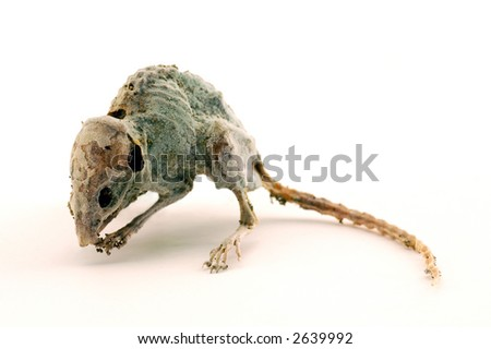 Dead mouse 1 - stock photo