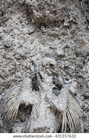 Dead pigeon mummy in a grey ash explosion