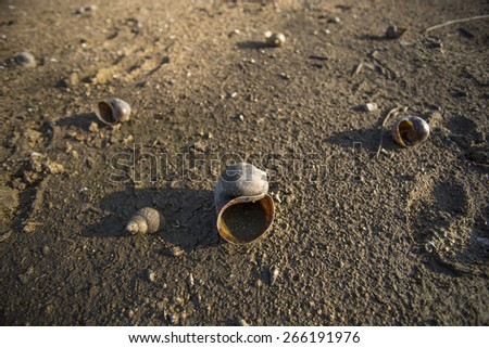 Dead shells - stock photo