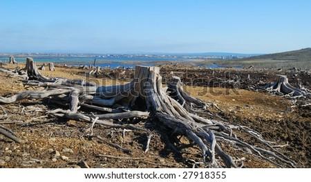 Dead stump - stock photo