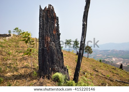 Dead stump in hill - stock photo