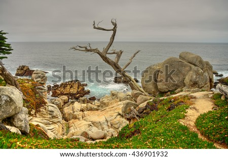 Dead tree and coastline Big Sur California