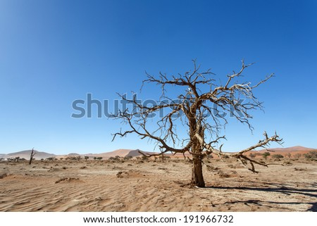 Dead Tree at Sossusvlei in the Namib Desert, Namibia, Africa - stock photo