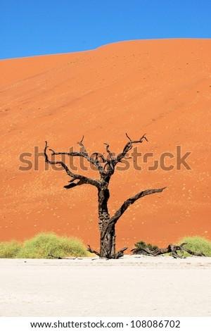 Dead tree branch, Dead Vlei, Namibia - stock photo