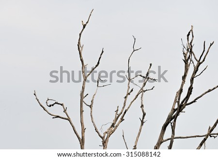 Dead tree branches - stock photo