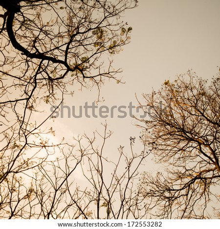 Dead tree , branches of a tree without leaves of autumn against sky - stock photo