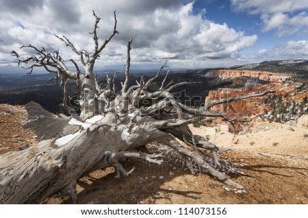 Dead tree, Bristlecone Loop, Bryce Canyon, Utah, USA - stock photo