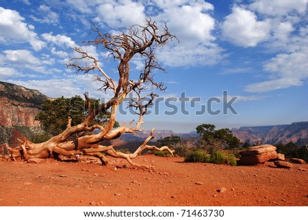Dead tree by the Kaibab trail,Grand canyon - stock photo