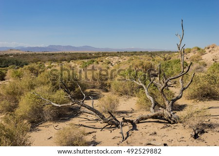 Dead tree fallen in sandy Mojave desert near Barstow California.