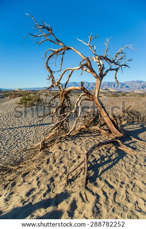 Dead tree in Death Valley National Park, California - stock photo