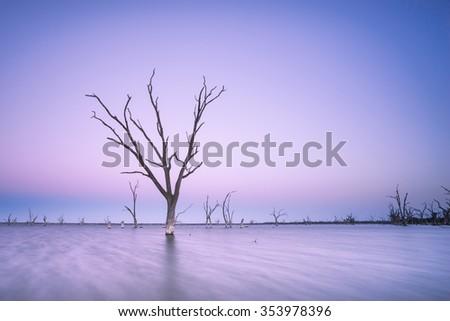Dead Tree in Lake Bonney, South Australia - stock photo