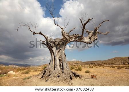 Dead tree in the desert - stock photo