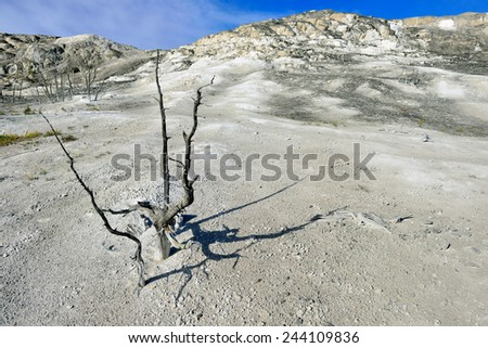 dead tree in the Jupiter's Cycle of Mammoth Hot Springs area of Yellowstone National Park, Wyoming - stock photo