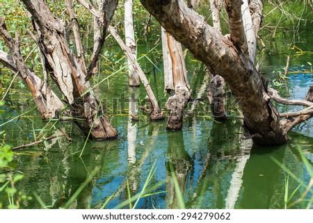 Dead tree in water - stock photo