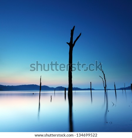 Dead tree in water on sunrise background - stock photo