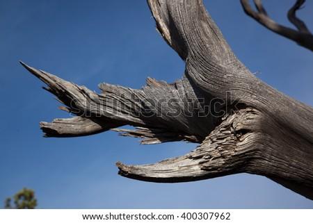 Dead tree limb against a blue sky - stock photo