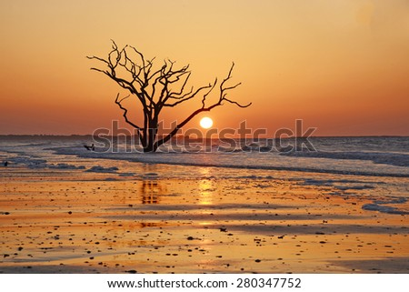 dead tree on a beach at botany bay near Charleston as seen during low tide - stock photo