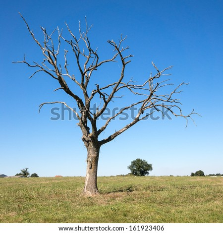 Dead tree on a lawn - stock photo