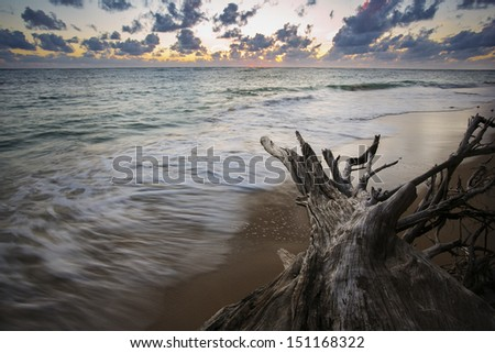 Dead tree on the beach. Long exposure - stock photo