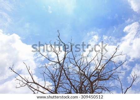 Dead tree on The blue sky - stock photo